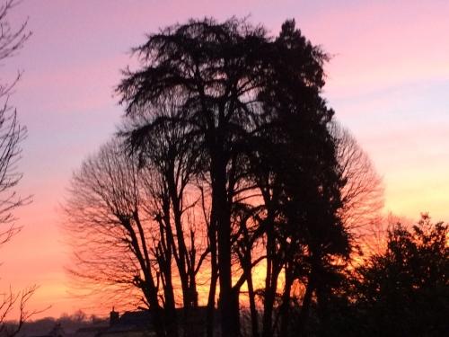 poésie,écriture,photo,arbres,lever de soleil