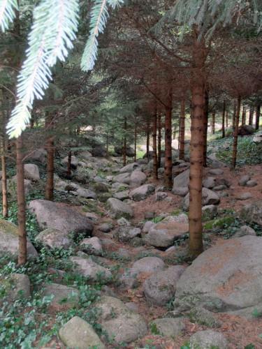 Forêt vosgienne (7).JPG
