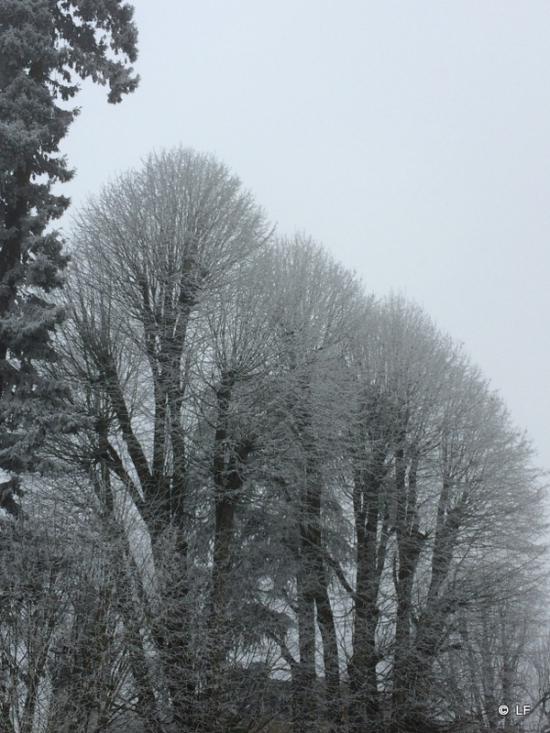 Arbres gelés.JPG