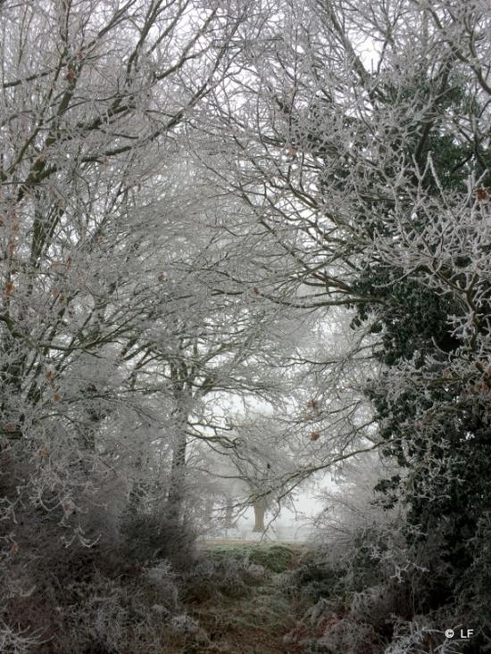 photo,givre,hiver,glace,beauté,nature