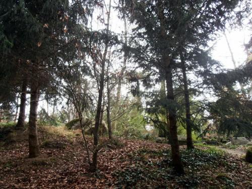 Forêt vosgienne (2).JPG