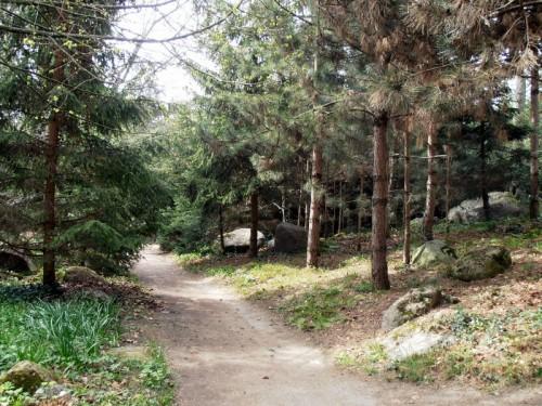 Forêt vosgienne (5).JPG